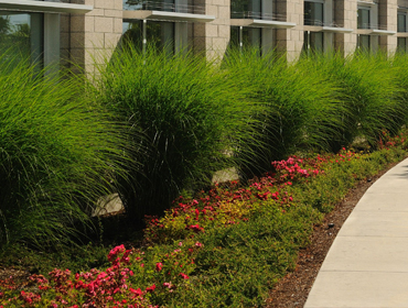 Landscape Management Services